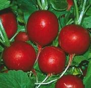 Семена редиса Rosso Gigante Sardo